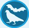 ontrole_pombos_e_morcegos_campo_grande_ms